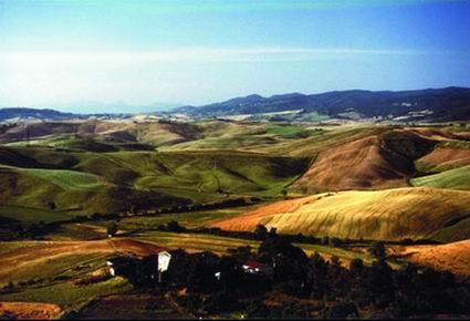 le colline di Terricciola